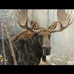 Bull Moose - Large Piece
