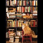 Gotham Bookstore Cats - Large Piece