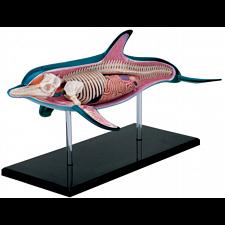 4D Vision - Dolphin Anatomy Model -