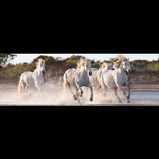 Panorama: Running Horses -