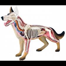 4D Vision - Dog Anatomy Model -