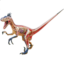 4D Vision - Deluxe Velociraptor Anatomy Model -