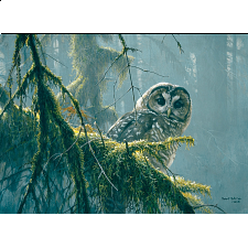 Mossy Branches : Spotted Owl - Large Piece -