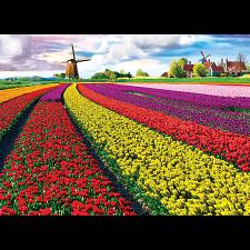 Tulip Fields -