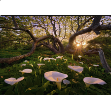 Magic Forests: Calla Clearing -