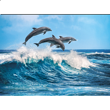 Dolphins -