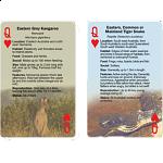 Playing Cards - Australian Wildlife Trivia