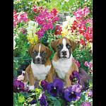 Pawzzles - Pansies & Pups