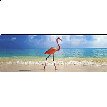 AVH Panorama: Flamingo