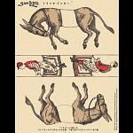 Famous Trick Donkeys - Color - Japanese