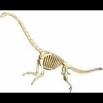 4D Vision - Brachiosaurus Anatomy Model