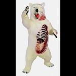 4D Vision - Polar Bear Anatomy Model