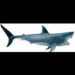 4D Vision - Great White Shark Anatomy Model