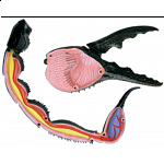 4D Vision - Scorpion Anatomy Model