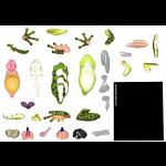 4D Vision - Frog Anatomy Model