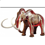 4D Vision - Woolly Mammoth Anatomy Model