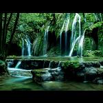 Magic Forests: Cascades