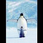 Penguin & Chick