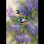 Chickadees and Lilacs