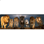 Big Cats: Panoramic Puzzle