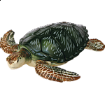 4D Puzzle - Green Turtle