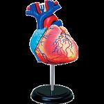4D Human Anatomy - Heart