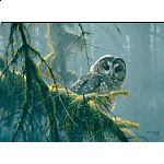 Mossy Branches : Spotted Owl - Large Piece