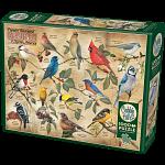 Popular Backyard Wild Birds of North America