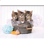 Kittens and Soap