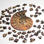 Ammonite Wooden Jigsaw Puzzle