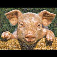 Photomosaic: Pig