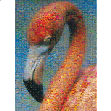 Photomosaic: Flamingo