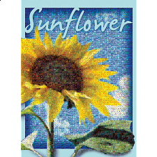 Photomosaic: Sunflower