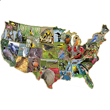 Official Birds of the States - 1000 Pieces