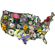 Official Flowers of the States - Shaped