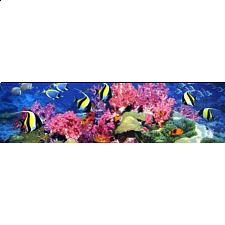 Panorama: Barrier Reef