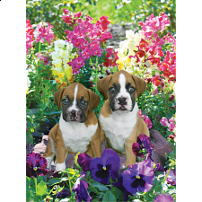 Pawzzles - Pansies & Pups - 500-999 Pieces