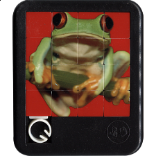 Brilliant Creatures - Red Eyed Tree Frog - Sliding Pieces Puzzles