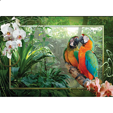 Cozy Macaws