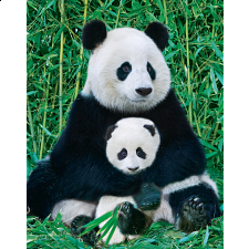 Mini Puzzle - Panda & Baby - 1-100 Pieces