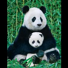 Mini Puzzle - Panda & Baby