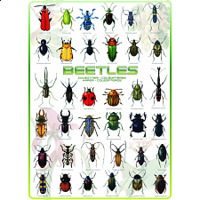 Beetles - 1000 Pieces
