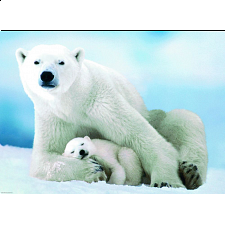 Polar Bear and Baby - Search Results