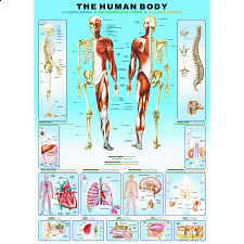 The Human Body - Search Results