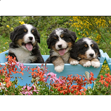 3 Puppies - Jigsaw Puzzle