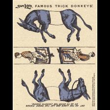Famous Trick Donkeys - Color - Postcard - English - Blue -