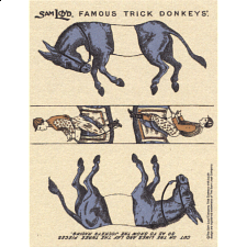 Famous Trick Donkeys - Color - Post Card - English - Blue - Search Results