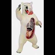 4D Vision - Polar Bear Anatomy Model -