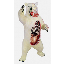 4D Vision - Polar Bear Anatomy Model -