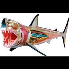 4D Vision - Great White Shark Anatomy Model -